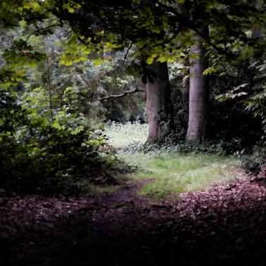 Rachel de LIefde fotografie   Fotografiecursus